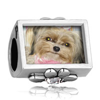 Charms Beads - puppy dog photo engraved clover clear crystal beads charms bracelets Image.