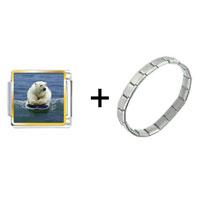 Items from KS - boogie boarding polar bear combination Image.