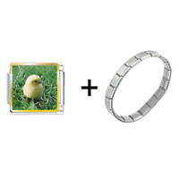 Items from KS - baby chick on bushes combination Image.