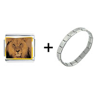 Items from KS - king of the jungle lion combination Image.