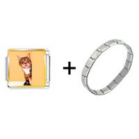 Items from KS - peek a boo cat combination Image.
