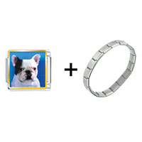 Items from KS - bull dog combination Image.