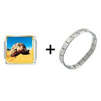 Items from KS - desert turtle combination Image.