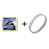 Items from KS - dolphin family in sea combination Image.