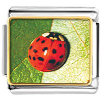 Items from KS - animal photo red ladybug italian charms bracelet link photo italian charm Image.
