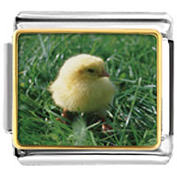 Italian Charms - animal photo baby chick italian charms bracelet link photo italian charm Image.