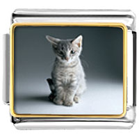 Italian Charms - kitty portrait animal photo italian charms bracelet link Image.