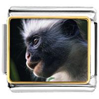 Italian Charms - friendly monkey animal photo italian charms bracelet link Image.