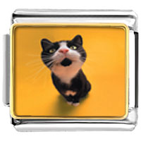 Italian Charms - cat yawning animal photo italian charms bracelet link Image.