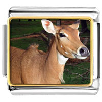 Items from KS - deer in the trees animal photo sports italian charms bracelet link photo italian charm Image.