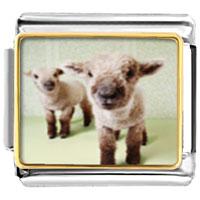 Italian Charms - animal photo baby lambs italian charms bracelet link photo italian charm Image.