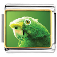 - green parrot photo italian charm Image.