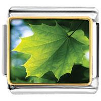 - green leaf photo italian charm Image.