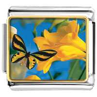Italian Charms - beautiful flower black butterfly photo &  nature italian charms photo italian charm Image.