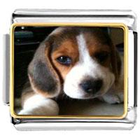 - cute puppy dog photo italian charm Image.