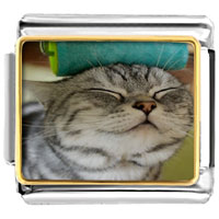 - cute cat animal photo italian charm Image.