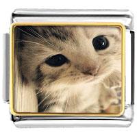 - cute cat animal photo italian charm Image.