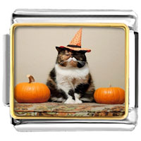 - cute cat animal jack o lantern halloween pumpkin photo italian charm Image.