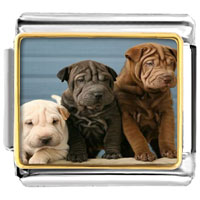 - cute puppy dogs photo italian charm Image.