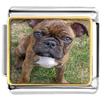 Italian Charms - 18 k gold plated cute pet love photo charm photo italian charm Image.