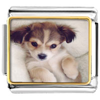 Italian Charms - 18 k gold cute pet love photo hand painted italian charm bracelet photo italian charm Image.