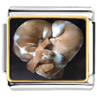 - cute pet love photo charm photo italian charm Image.