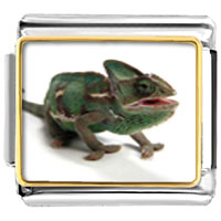 Items from KS - green iguana animal photo italian charms bracelet link Image.