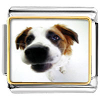 Italian Charms - beagle animal photo italian charms bracelet link Image.