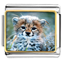 Items from KS - baby cheetah cub animal photo italian charms bracelet link Image.