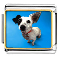 Italian Charms - parson russell terrier animal photo italian charms bracelet link Image.
