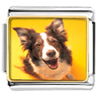 Italian Charms - border collie dog animal photo italian charms bracelet link Image.