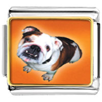 Italian Charms - brown white bulldog animal photo italian charms bracelet link Image.