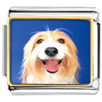 Italian Charms - bearded collie face animal photo italian charms bracelet link Image.