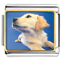 Italian Charms - golden retriever puppy animal photo italian charms bracelet link Image.