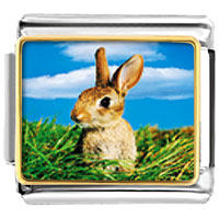 Italian Charms - animal photo bunny in field italian charms bracelet link photo italian charm Image.