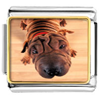 Italian Charms - wrinkly dog animal photo italian charms bracelet link Image.