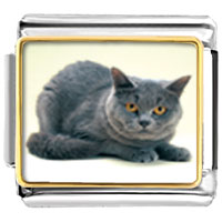 Italian Charms - grey cat animal photo italian charms bracelet link Image.