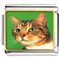 Italian Charms - green eyed cat animal photo italian charms bracelet link Image.