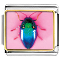 Items from KS - animal photo florescent bug italian charms bracelet link photo italian charm Image.