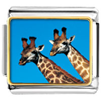 Two Giraffes Animal Photo Italian Charms Bracelet Link