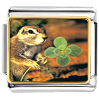 Items from KS - animal photo squirrel and clover italian charms bracelet link photo italian charm Image.