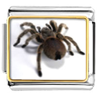 Items from KS - animal photo deadly spider italian charms bracelet link photo italian charm Image.