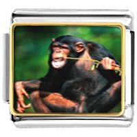 Italian Charms - funny monkey animal photo italian charms bracelet link Image.
