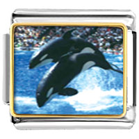 Italian Charms - killer whale show animal photo italian charms bracelet link Image.