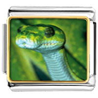 Items from KS - green snake animal photo italian charms bracelet link Image.