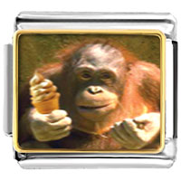 Italian Charms - ice cream chimpanzee animal photo food italian charms bracelet link photo italian charm Image.