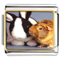 Italian Charms - animal photo bunny and guinea pig italian charms bracelet link photo italian charm Image.