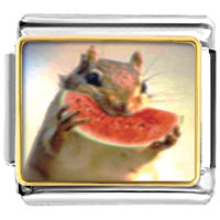 Items from KS - animal photo squirrel and sweet watermelon italian charms bracelet link photo italian charm Image.
