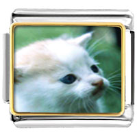 Italian Charms - little kitten animal photo italian charms bracelet link Image.