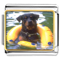 Italian Charms - dog swimming with floaty animal photo italian charms bracelet link Image.